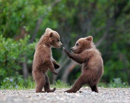 Da cubs be doin some karate!!! Haha