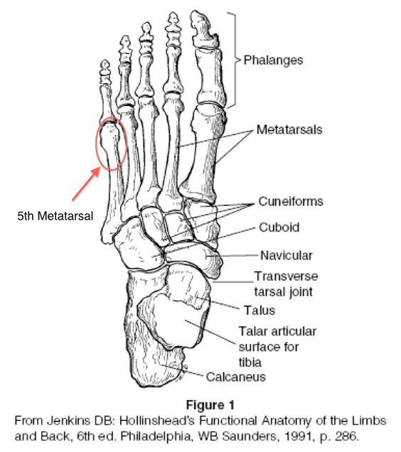 foot anatomy coloring pages - photo#4