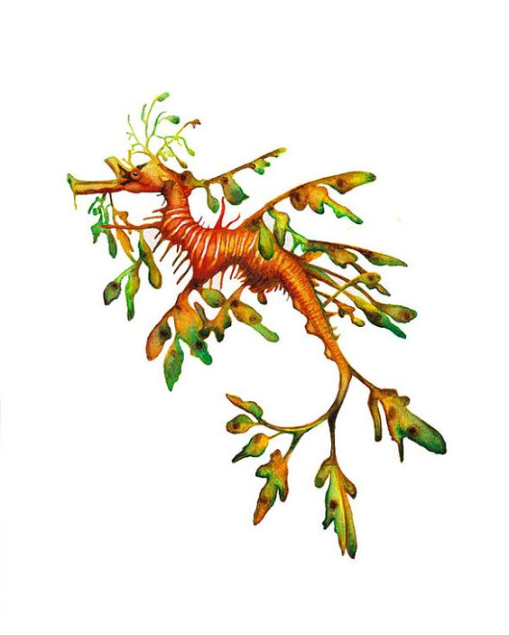 In love with this painting leafy sea dragon painting for Sea dragon tattoo