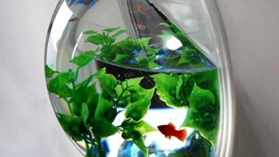 Creative the o 39 jays and pets on pinterest for Fish bowl pets