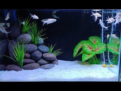 3 Aquarium Decor Ideas That You Must Try Fish Aquarium Decorations Diy Fish Tank Fish Tank Decorations
