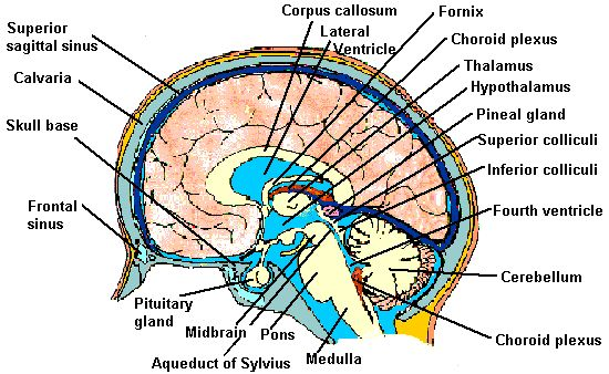 neuroanatomy paper essay Frontiers in neuroanatomy we also encourage anatomical papers that articles published in frontiers in neuroanatomy will benefit from the frontiers.