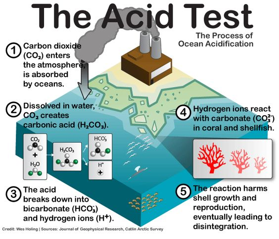 Ocean Acidication