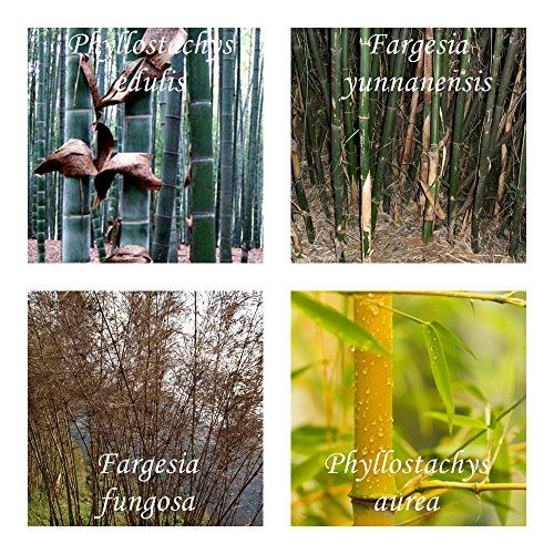 Elegant Bambus Mix   Extremst Frosthart ( 19C° Bis  25C°)   4