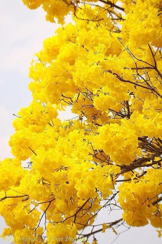 花 旅行风景 唯美梦幻 植物花卉 自然...
