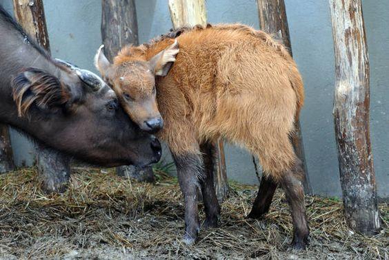 foto meravigliose di animali - Cerca con Google