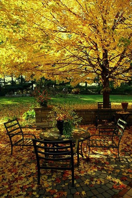 Fall - patio