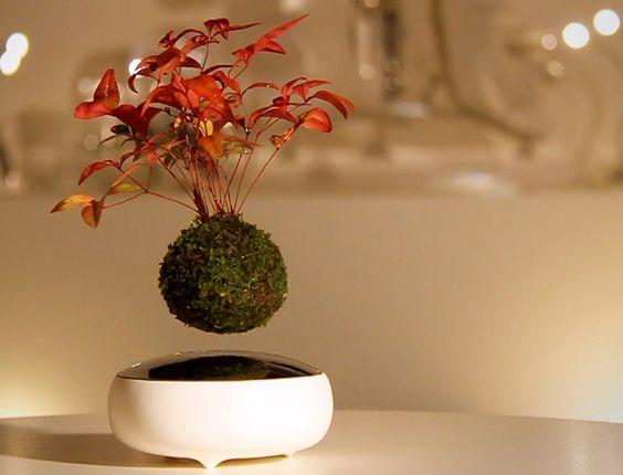 Les plantes d'intérieur volent avec le Air Bonsai  Nature, Unique ...