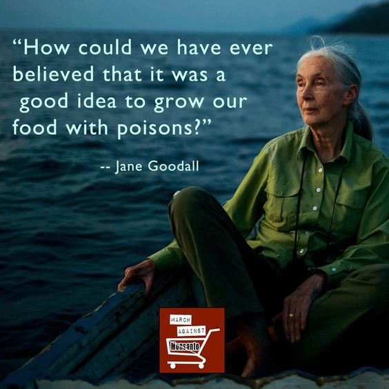 Jane Goodall Quotes: Growing Food With Poisons -- Against GMO's And Chemicals