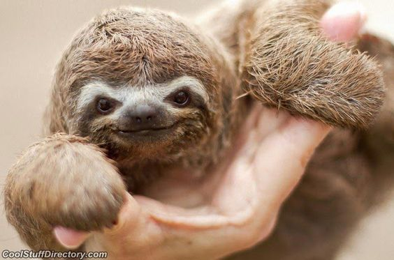 Baby Sloth...Smile