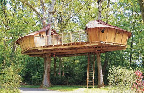 I dream of living in a tree house