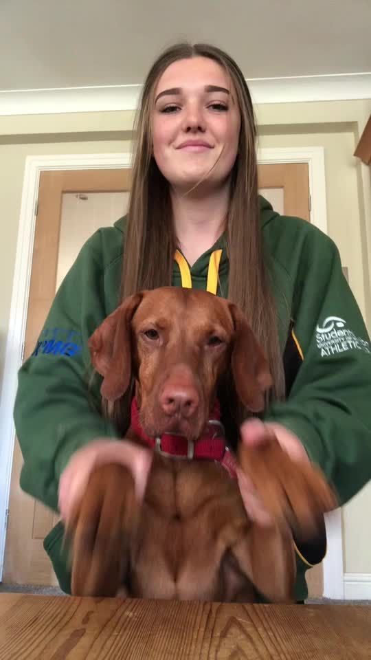 Pin By Robyn Glasspool On Tik Tok Challenges Barnes Dogs