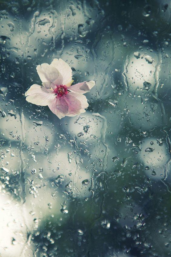 Lluvia de primavera: