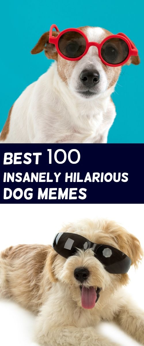 Read These Funny Dog Memes Pure Humor Hilarious German Shepherd Dog Memes Funny Dog Memes Dog Memes Clean