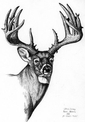how to draw a simple elk