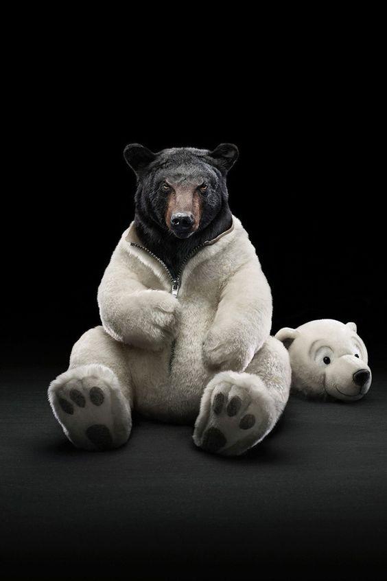Grizzlybeer of ijsbeer