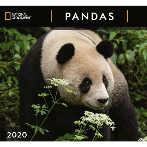 Pandas 2020 Calendar National Geographic Panda Dog Calendar National Geographic