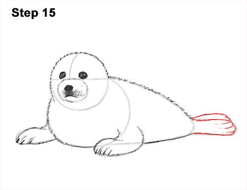 How To Draw A Seal Pup Harp Seal Seal Pup Polar Bear Art