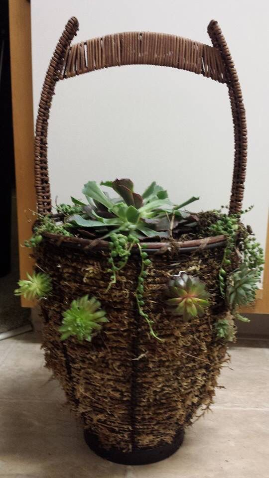 I made the cute basket of succulents after a thrifting trip.