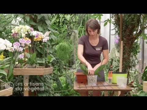 Comment Planter Rempoter Et Arroser Votre Orchidee Le