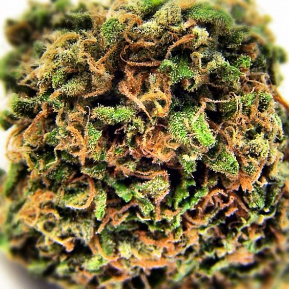 #MedicatedMonday - brought to you by @treeshurts - Check out this Weeks Featured Review from the Community: Mr. Nice Guy (G-13 X #Hash #Plant) http://bit.ly/wxrYNt #mmj #cannabis