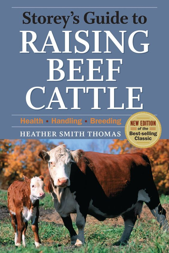 If you're raising beef cattle you'll need to know the best feed options, and feeding beef cattle on pasture is the most natural way to go. Here's the breakdown on grass, hay, alfalfa and more from the classic guidebook Storey's Guide to Raising Beef Cattle.