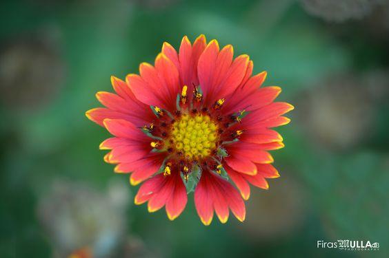 flower macro - flower macro nature nikon d7100
