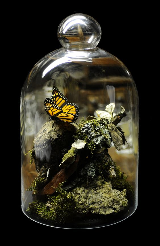lifebender: Monarch butterfly and Tobacco Horn Moth bell jar by *Meddling-With-Nature I love this so much.: