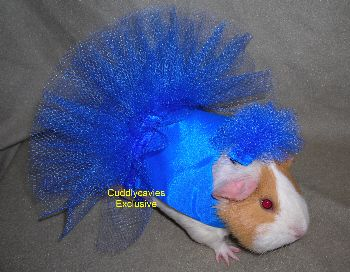lots of different guinea pig costumes on this site