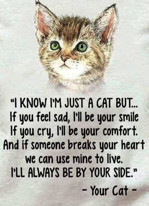 Adopt A Shelter Cat Month Means Free Cat Adoptions You Cant Buy Love But You Can Sure Adopt It Come See Us At The San Angel Cat Quotes Cat Love Crazy