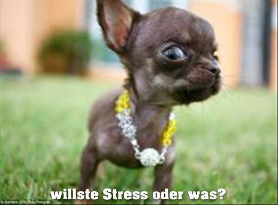 Die kleinsten Hunde haben ja bekanntlich die größte Schnauze   Whatsapp-Bilder.com