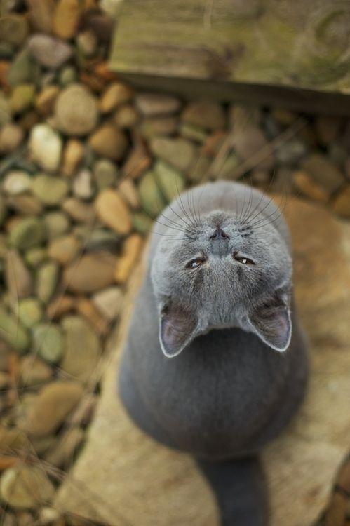Upside down kitty!!!
