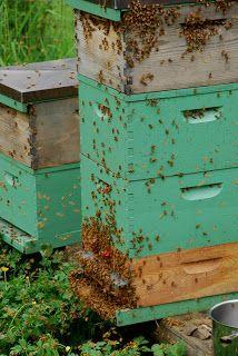 Applegarth Farm: Bee Keeping