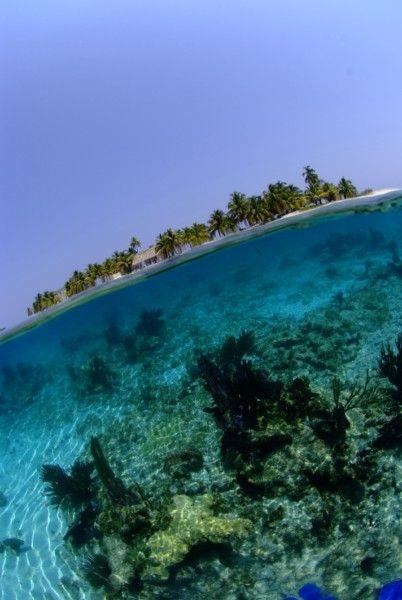 A tenger élővilága, Belize