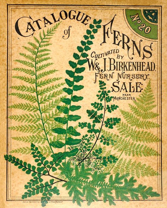 Antique botanical print catalogue of ferns vintage woodland flora - Deco vintage belgique ...
