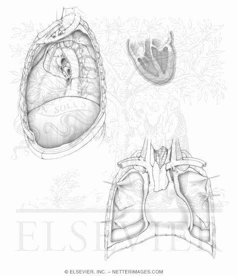 Netters Anatomy Coloring Book Inspirational Illustrations In Anatomy Coloring Book Hansen 1e Turtle Coloring Pages Coloring Books Anatomy Coloring Book