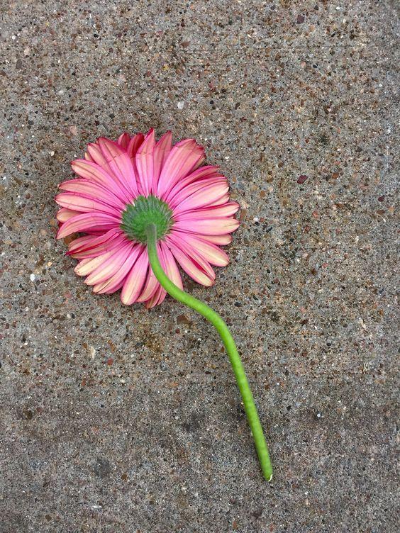 صور عالية الدقه Photo Photo Galleries Plants