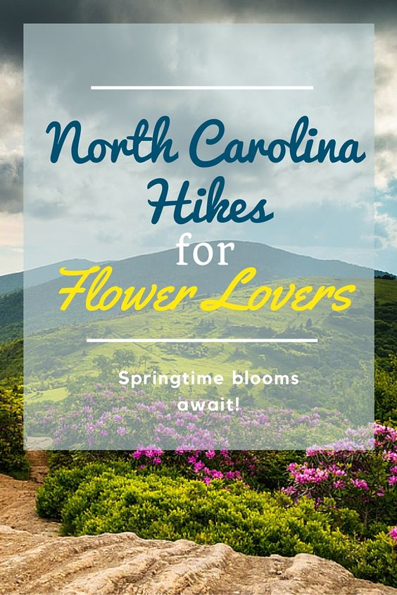 Take Joe Miller's advice, and find the best North Carolina #hikes for flower lovers. Spring is here!