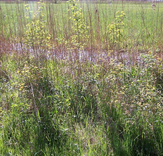 CH-Gottlieben Naturschutzgebiet