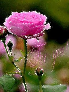FLOWER LOVE ~~~~: