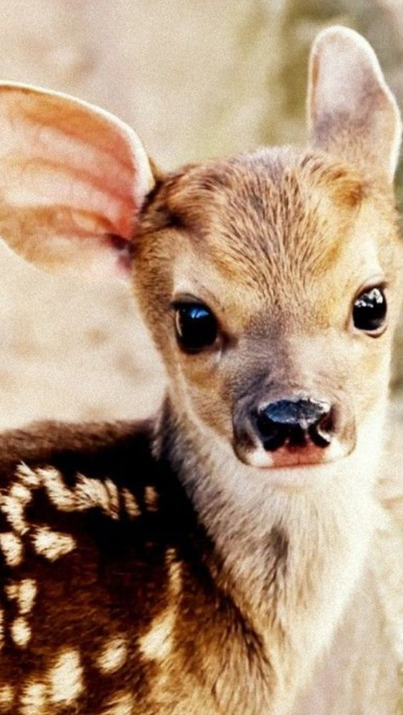 A baby white tail deer.