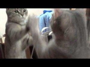 Video - Spiegelbild