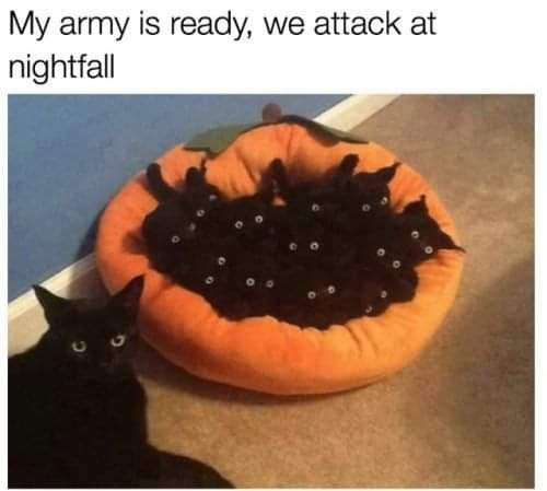 Army Ready Https Ift Tt 2n7eeie Animal Memes Funny Cat Pictures Cute Funny Animals