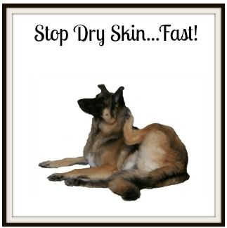 Dog dry skin causes lots of itching and discomfort but can ...