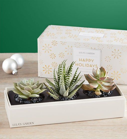 Lula's Holiday Succulents | 1800Flowers.com - 157434