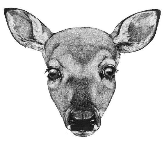 deer head drawing the deer kind pinterest deer drawings and deer heads. Black Bedroom Furniture Sets. Home Design Ideas