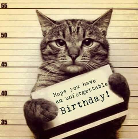 Bildergebnis Fur Cat Birthday Meme Lustige Geburtstagsbilder