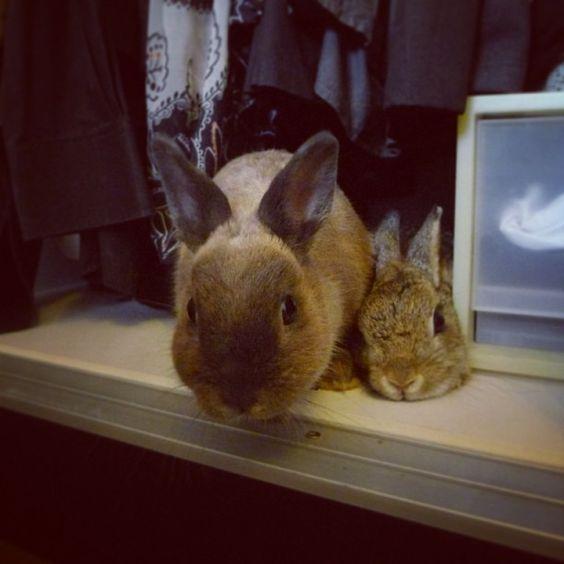 Bun Bun and Bun Bun Jr.