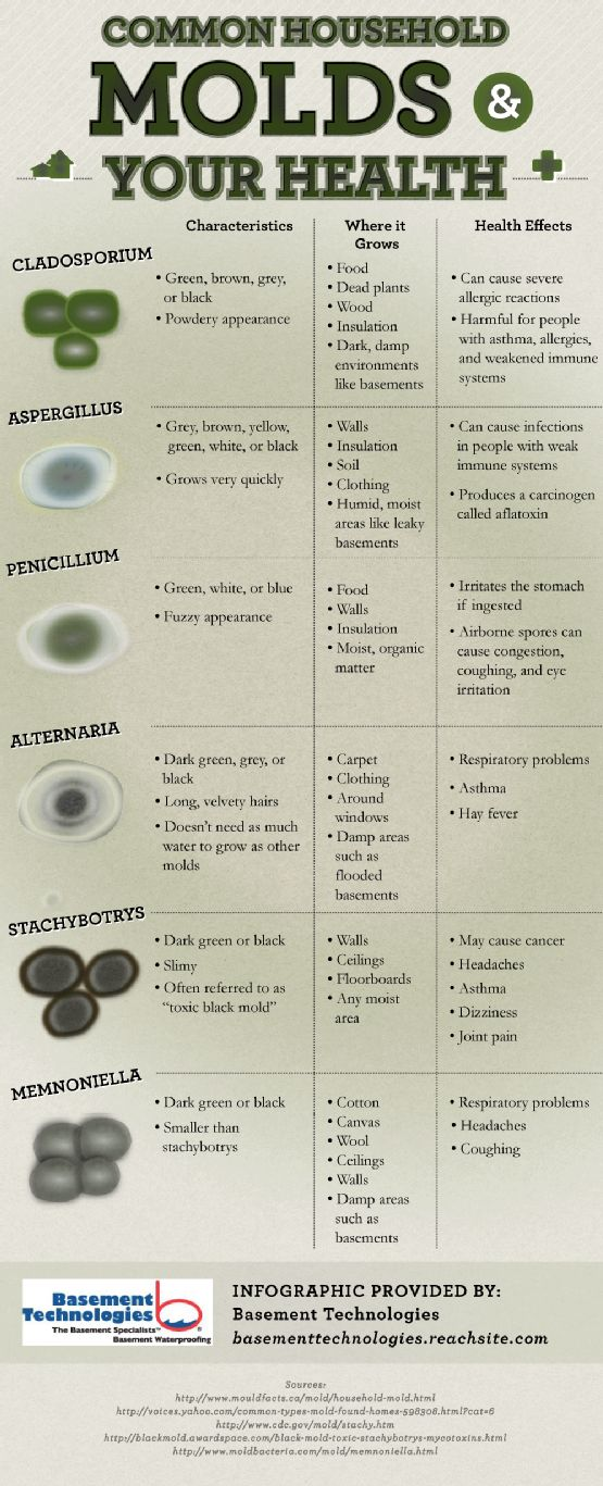 A listing of the different types of mold and associated characteristics and health risks of each.