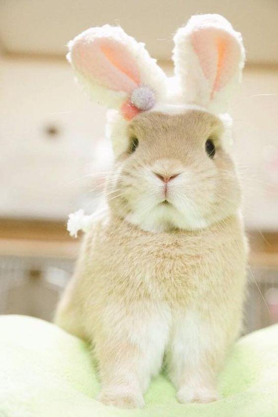 fotos de conejos bebés